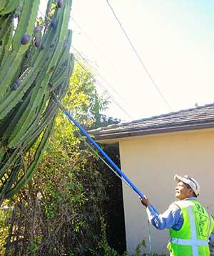 tree removal service company in Arcadia, california