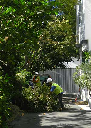 Sierra Madre Tree Service Company JRS tree service and landscape