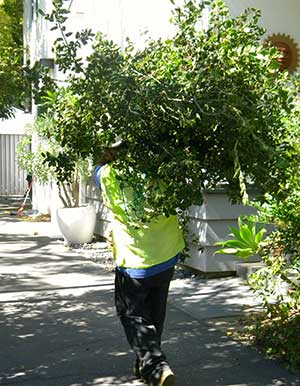Sierra Madre Tree Service expert Company JRS tree service and landscape