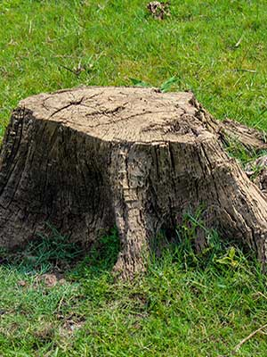 Stump Removal service in Pasadena, california