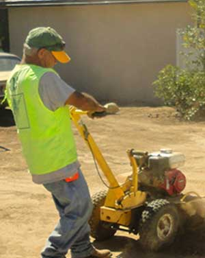 Stump Removal or Stump Grinding services in pasadena