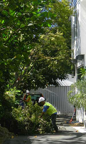 Tree trimming and tree cutting service in pasadena, CA
