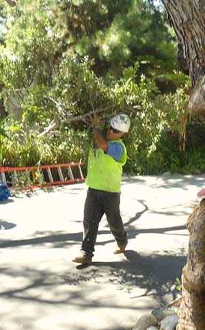 Broken branches, Branches over power lines, driveways, sidewalks or streets