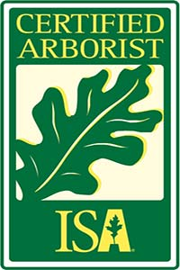 certified arborist JRS tree and landscape co. in Pasadena, CA