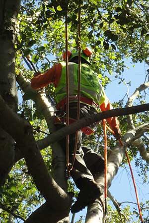 Expert Tree Removal service in Pasadena, California