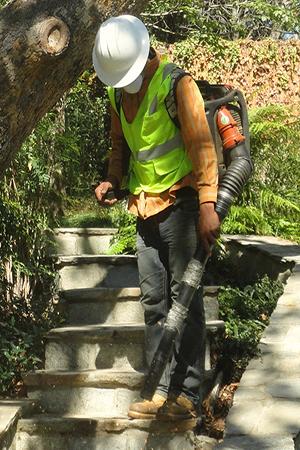 Tree service & landscape company san Marino, california