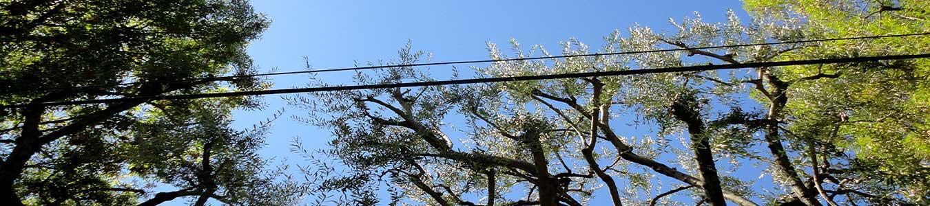 Tree service and landscape company south pasadena, california