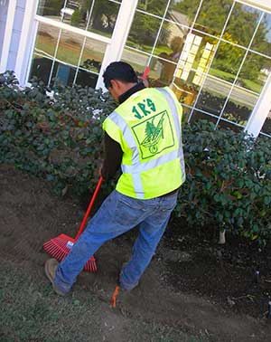 Tree service & landscape company south pasadena, california