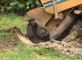Stump grinding service in pasadena, California