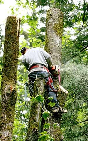 Professional tree removal service in pasadena, california