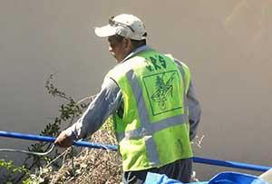 JR'S Tree Removal Service in Pasadena, CA